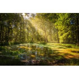 Waldlichtung - Raumduft