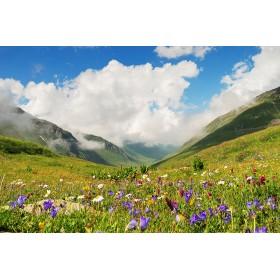 Bergblumen - Natürlicher...